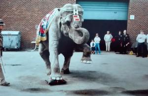 Nos coussins de levage, résistants à toutes charges lourdes, même celle d'un éléphant